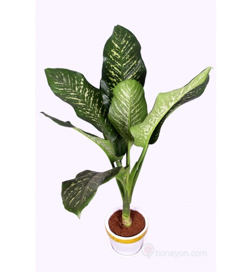 PATABAHAR WITH GOLDEN WHITE PLANTER - LARGE