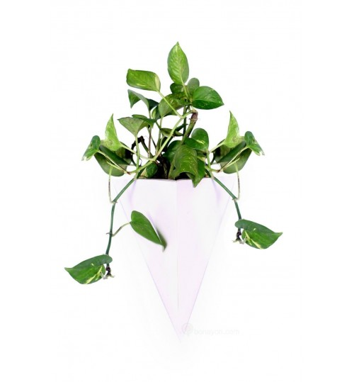 Vertical White PVC Triangle Box Planter With Hanging System Money Plant Indoor