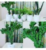 Cactus Euphorbia With White Ceramic Planter
