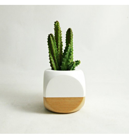 Cactus for Desk & Indoor (with exclusive ceramic pot)