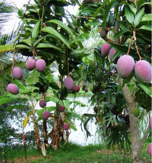 Buy online Bonsai, Tree, Seed, Gardening Accessories & Nursery items