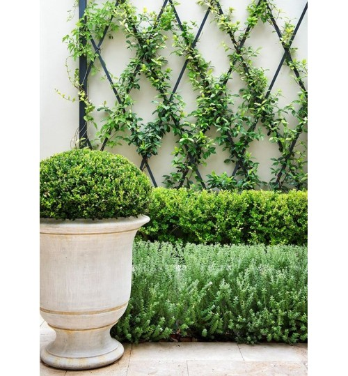 Exclusive Terracotta Vintage Style Planter - Outdoor Indoor Landscaping