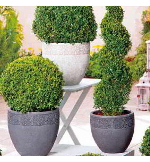 Round Shape Designed Elegant Concrete Planter Mluti Color