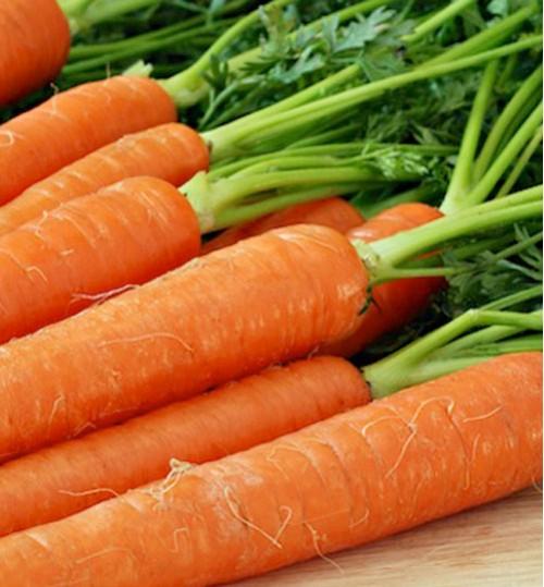 Carrot (গাজর)