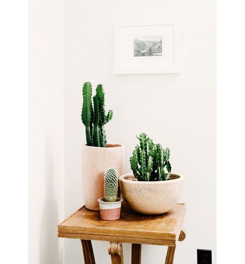 Cactus For Desk (with ceramic pot)