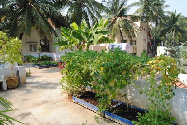 Rooftop Gardening Amp Lawn Beautification Green Dhaka