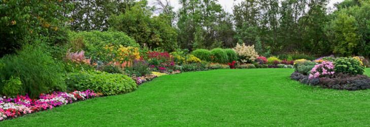 Garden Ideas Small Landscape Gardens Pictures Gallery: Buy Online Bonsai, Tree, Seed, Gardening