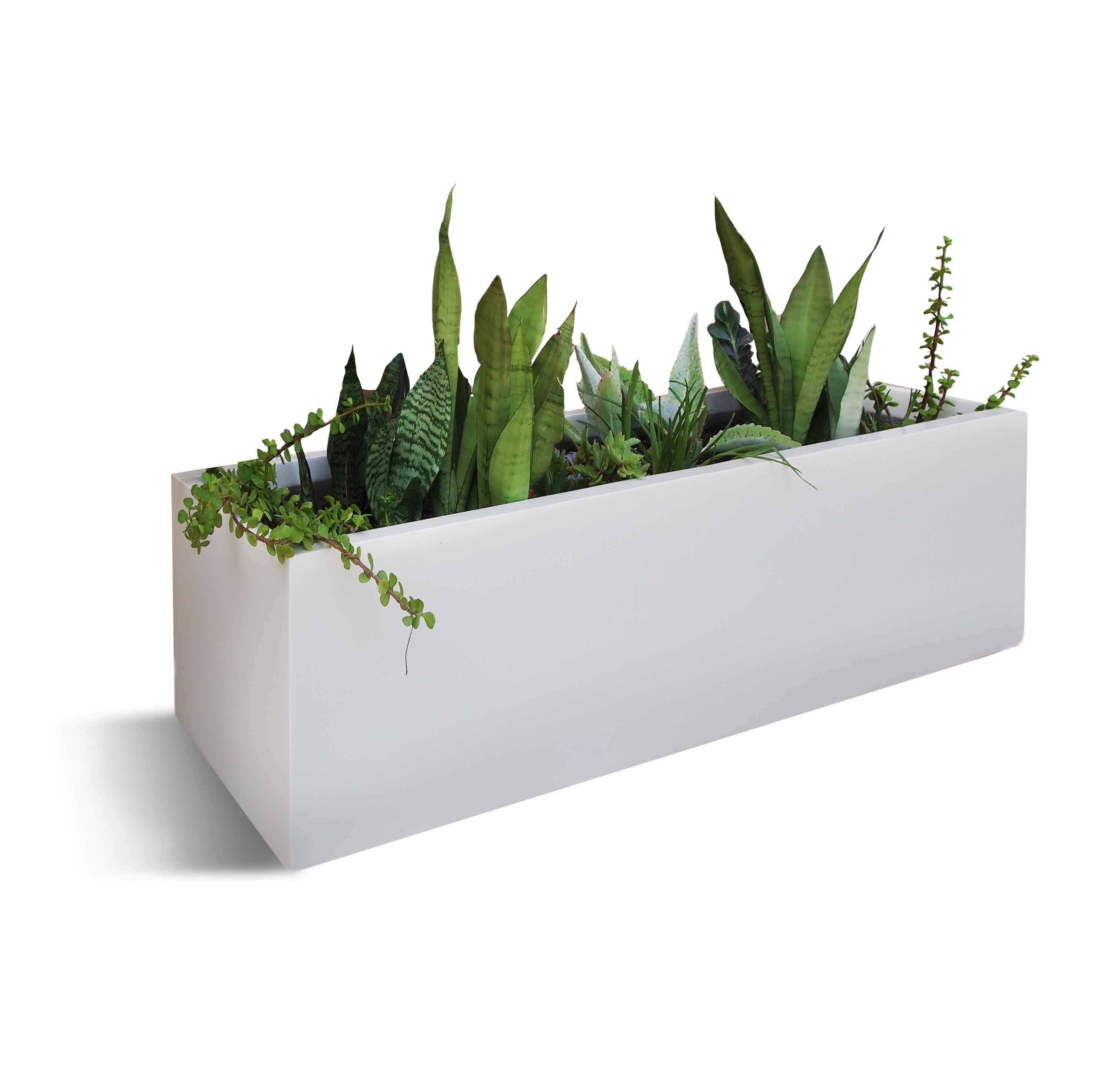 Bonayon Com Plant Pot Rental And Regular Service