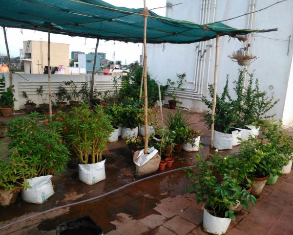Rooftop Gardening Amp Lawn Beautification Green Dhaka